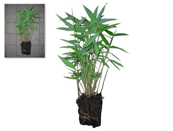 exemple-detourage-photo-plante-galerie
